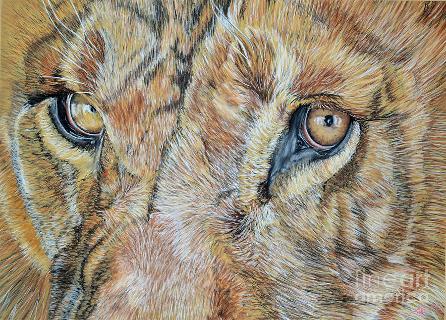 Pastel Pastel - Lion Eyes by Ann Marie Chaffin