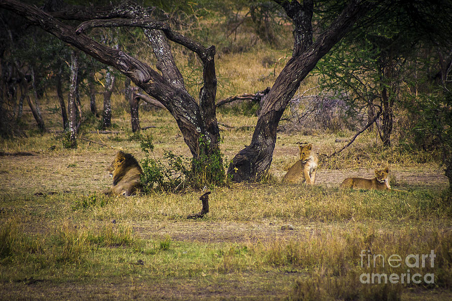 Places Photograph - Lion In The Dog House by Darcy Michaelchuk