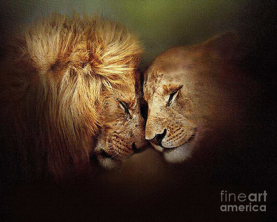 Lion Painting - Lion Love by Robert Foster
