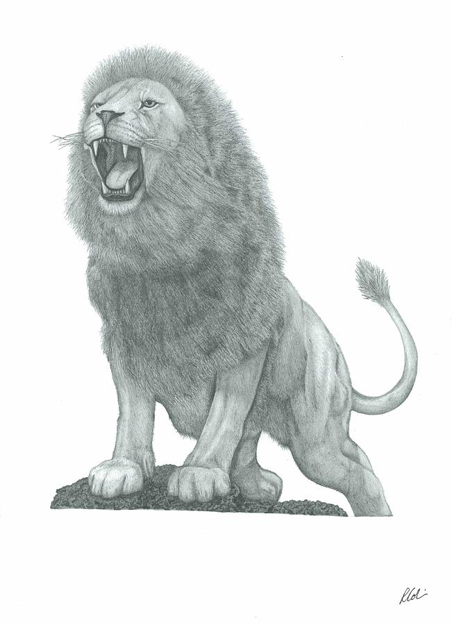Lion Roar Drawing by Rich Colvin