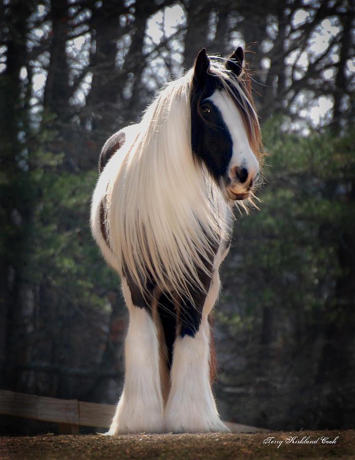 Horse Photograph - Lioness Dahlia by Terry Kirkland Cook