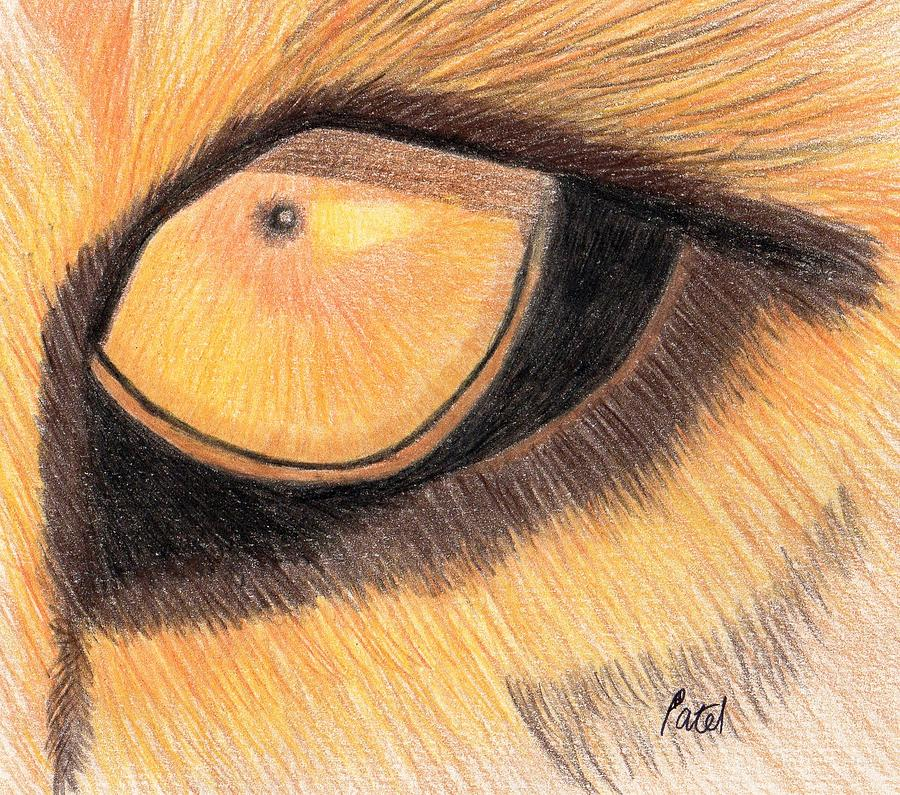 Lion Drawing - Lions Eye by Bav Patel