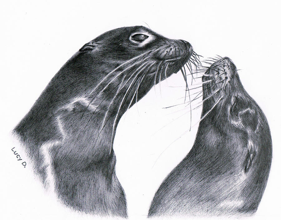 Sea Lion Drawing - Lions by Lucy D