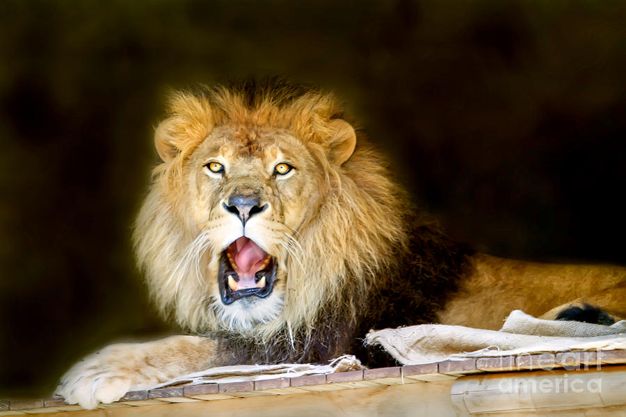 Lion Digital Art - Lions Pride by Shannon Rogers
