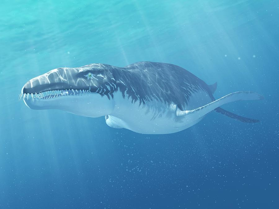 Liopleurodon Marine Reptile, Artwork Digital Art by Sciepro