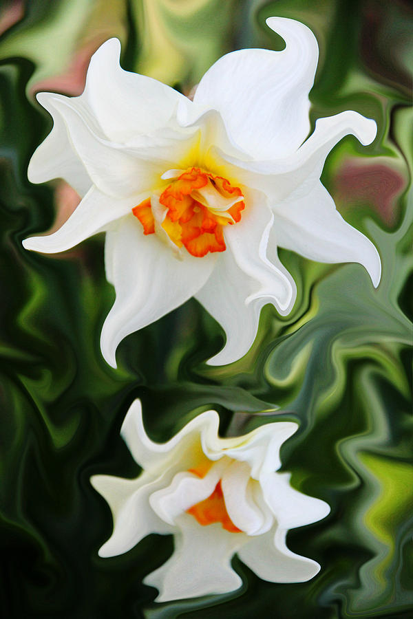 Narcissus Photograph - Liquid Narcissus by Mary Burr