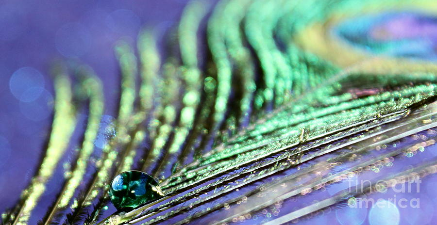 Peacock Feather Photograph - Liquid Peacock by Krissy Katsimbras