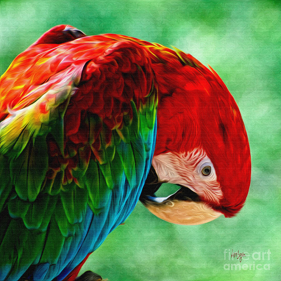 Parrot Photograph - Listen To Your Heart by Lois Bryan