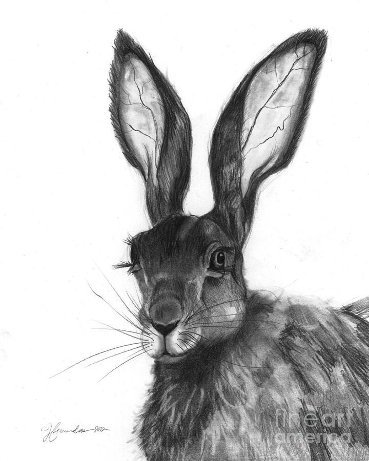 Listening Ears Drawing By J Ferwerda
