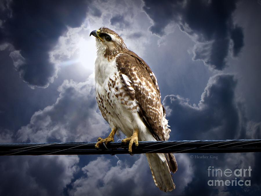 Hawk Photograph - Listening To Gaia by Heather King