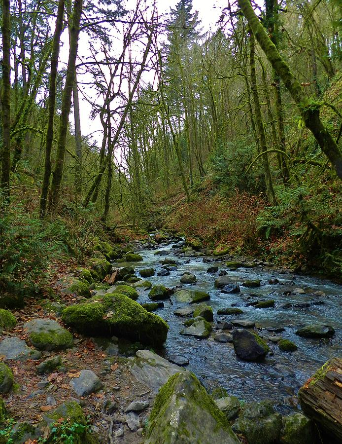 Nature Photograph - Listening To The Creek by Charles Lucas