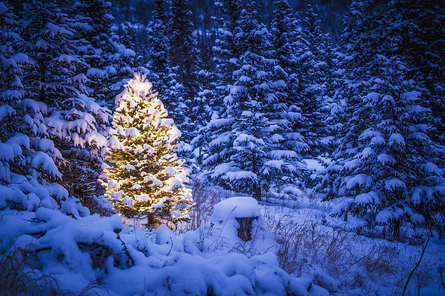 Mountain Christmas Tree.Lit Christmas Tree In Snow Covered