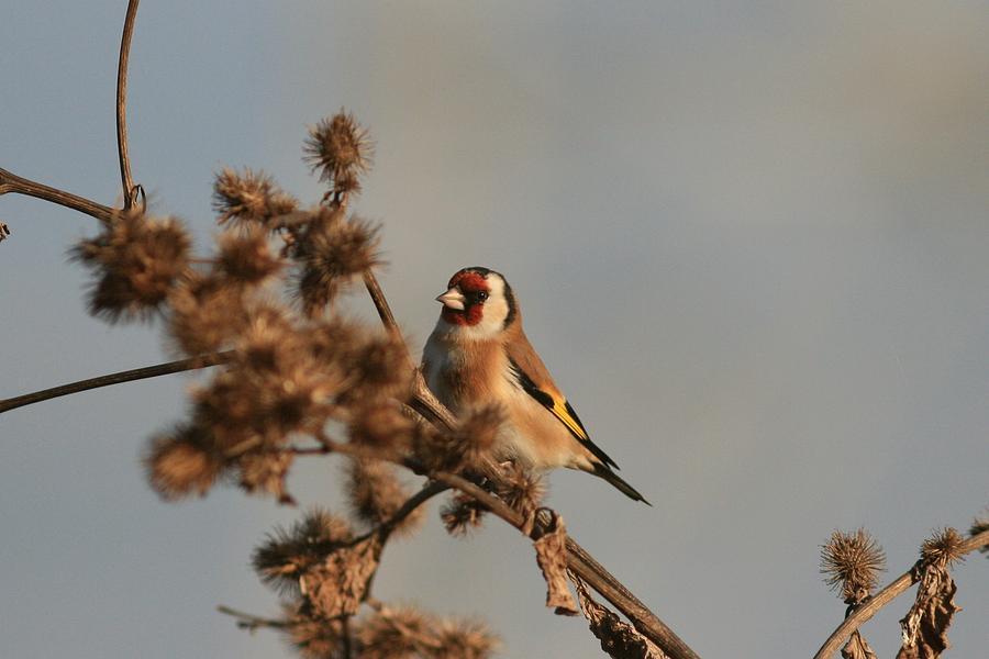 Litle Bird Photograph by Dragomir Felix-bogdan