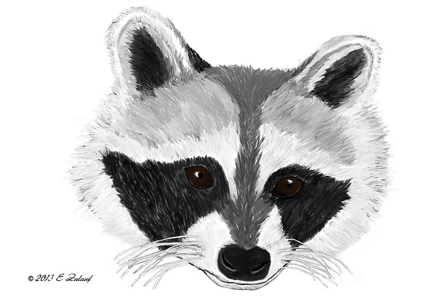 Raccoon Drawing - Little Bandit - Raccoon by Elizabeth S Zulauf