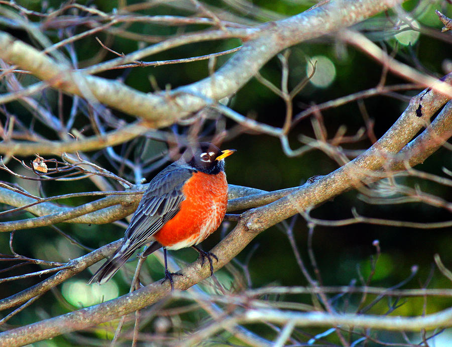 Bird Photograph - Little Bird by Carolyn Ricks