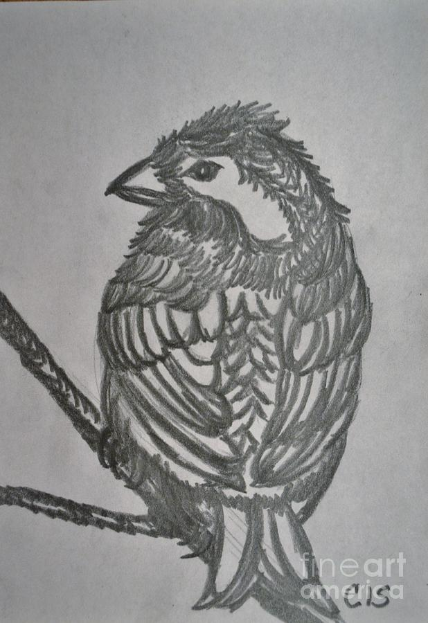 Bird Drawing - Little Bird by Cecilia Stevens