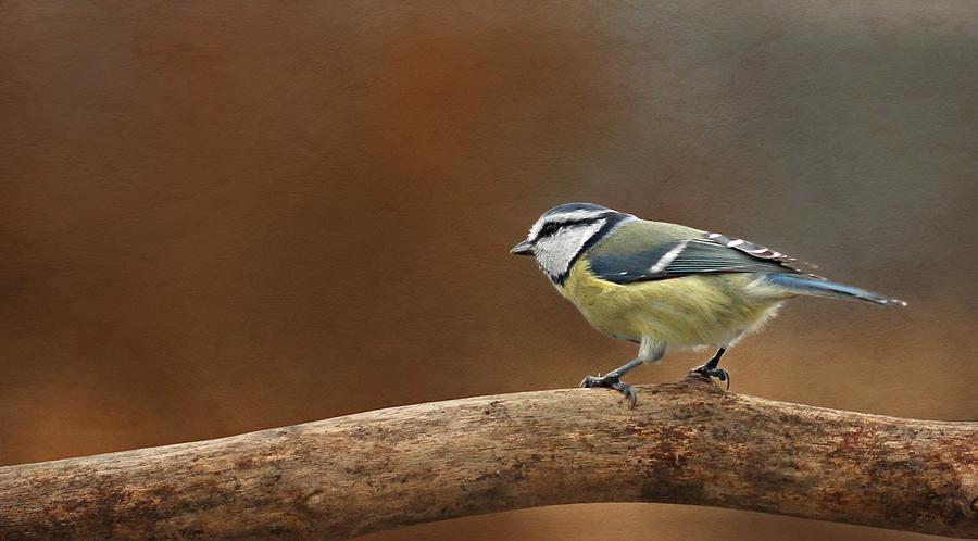 Decoration Photograph - Little Birdie by Heike Hultsch