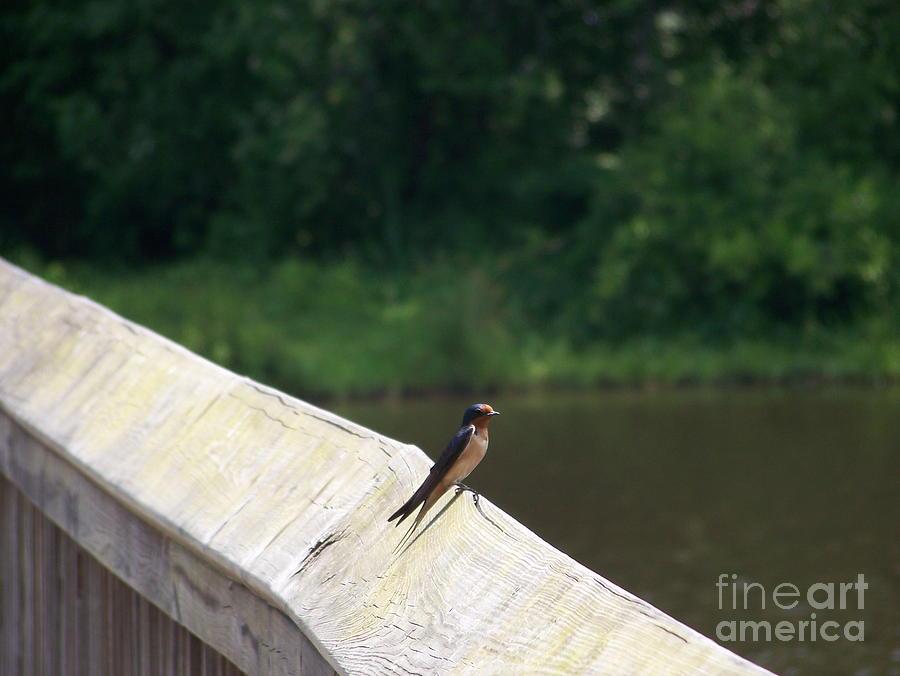 Little Birdie Photograph - Little Birdie by Kevin Croitz