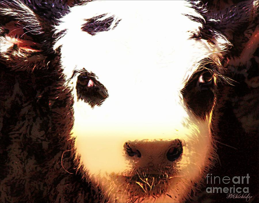 Angus Steer Photograph - Little Black Baldy by Barbara Chichester