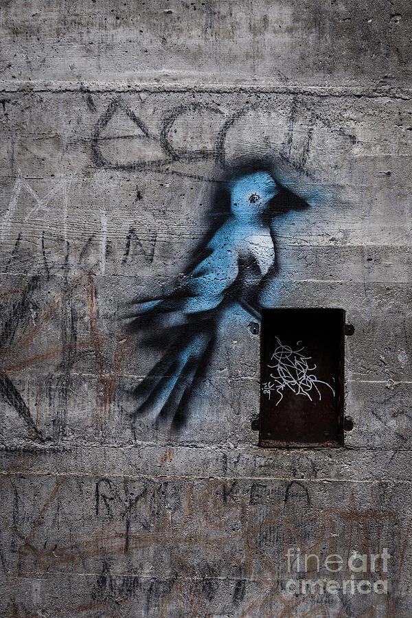 Little Blue Bird Graffiti Photograph