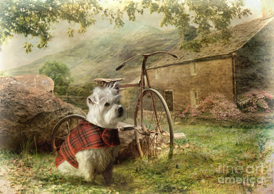 West Highland Terrier Photograph - Little Bobby by Trudi Simmonds