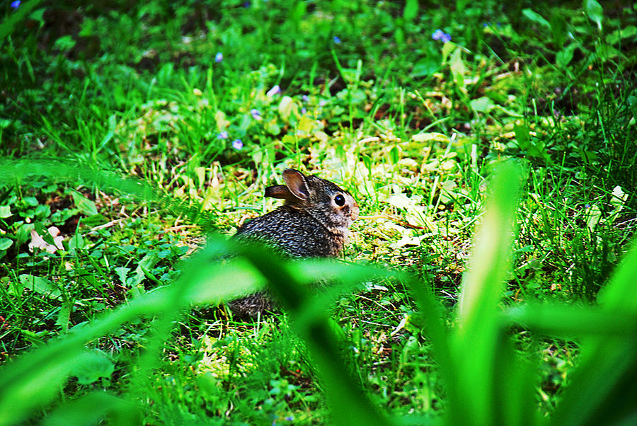 Grass Photograph - Little Bunny Fufu by Mark Russell