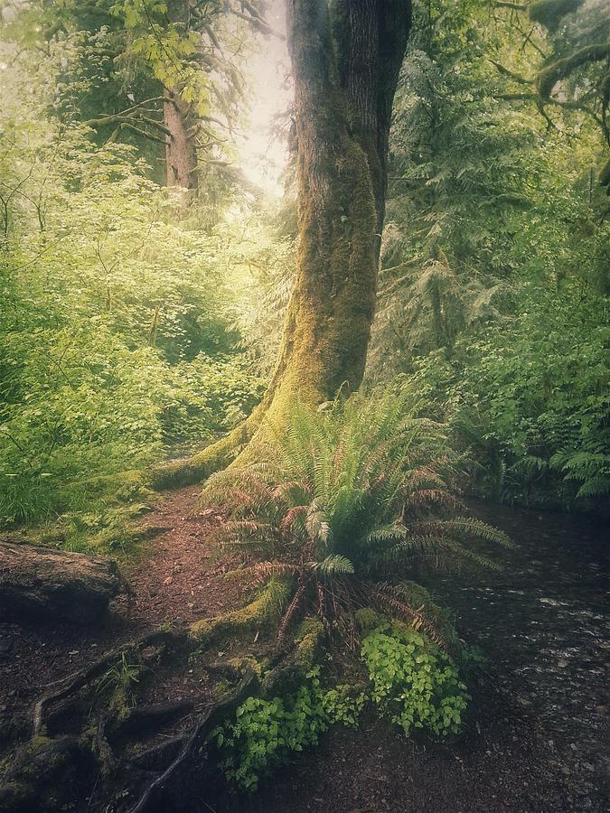 Forest Photograph - Little Creek by Alexander Kunz