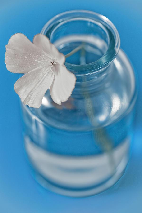 Blue Photograph - Little Flower In A Vase by Frank Tschakert