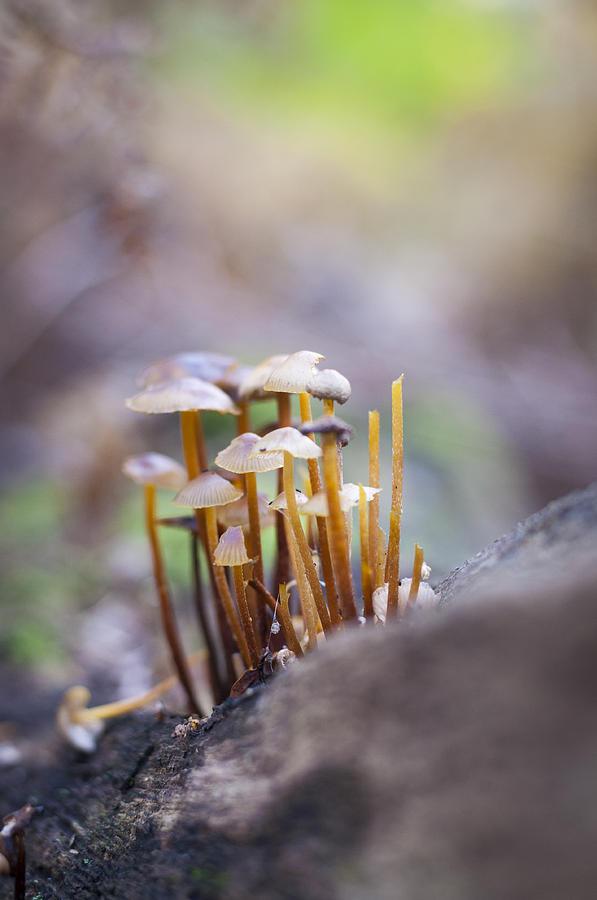 Little fungi world by David Isaacson