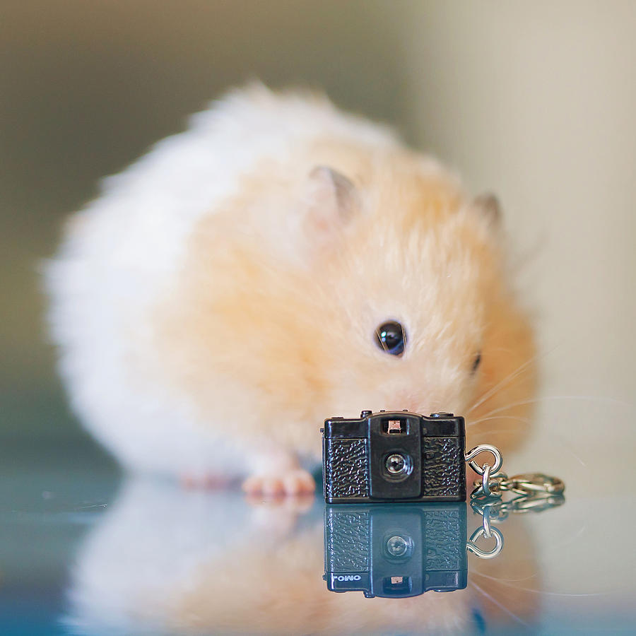 https://images.fineartamerica.com/images-medium-large-5/little-hamster-and-tiny-toy-camera-carol-yepes.jpg