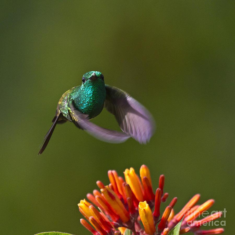 Bird Photograph - Little Hedgehopper by Heiko Koehrer-Wagner