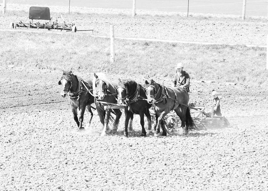 Horses Photograph - Little Helper by BandC  Photography