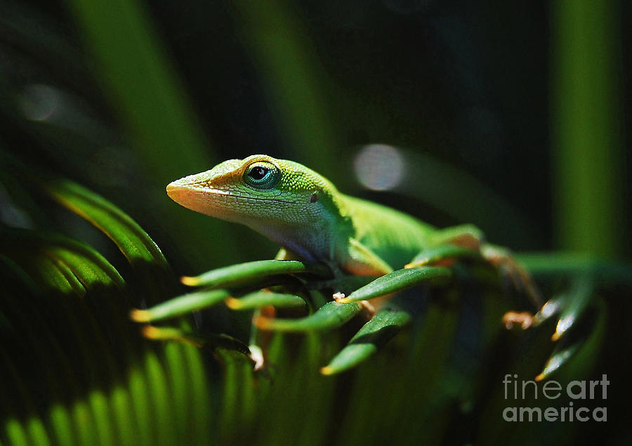 Reptiles Photograph - Little Lizard On A Sago Palm by Kathy Baccari