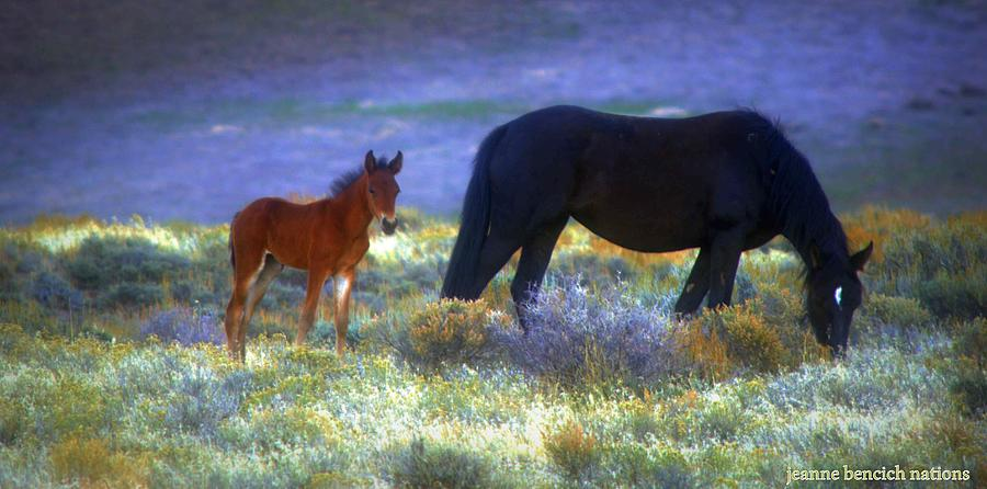 Wild Horses Photograph - Little Miss October  by Jeanne  Bencich-Nations