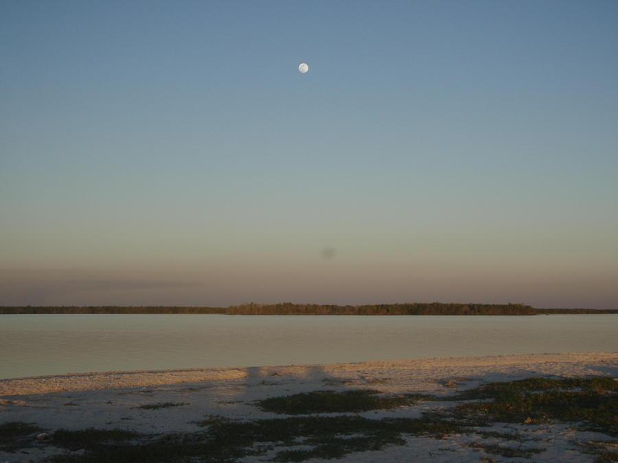 Everglades Photograph - Little Moon by Robert Nickologianis