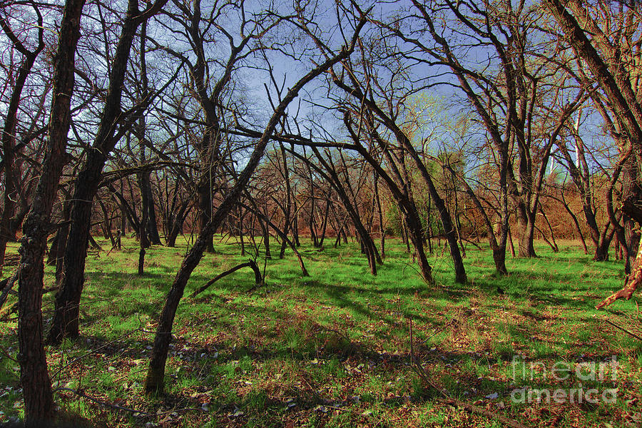 Park Digital Art - Little Oaks by David Taylor
