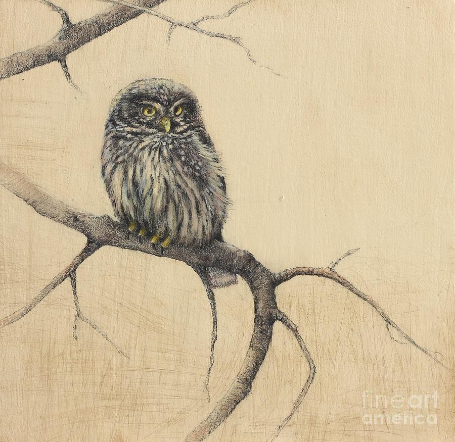 Owl Drawing - Little Owl by Lori  McNee