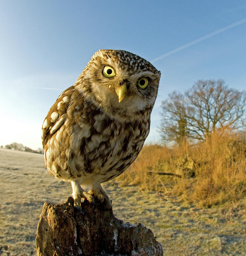 Little Owl On Post Photograph by Russell Savory