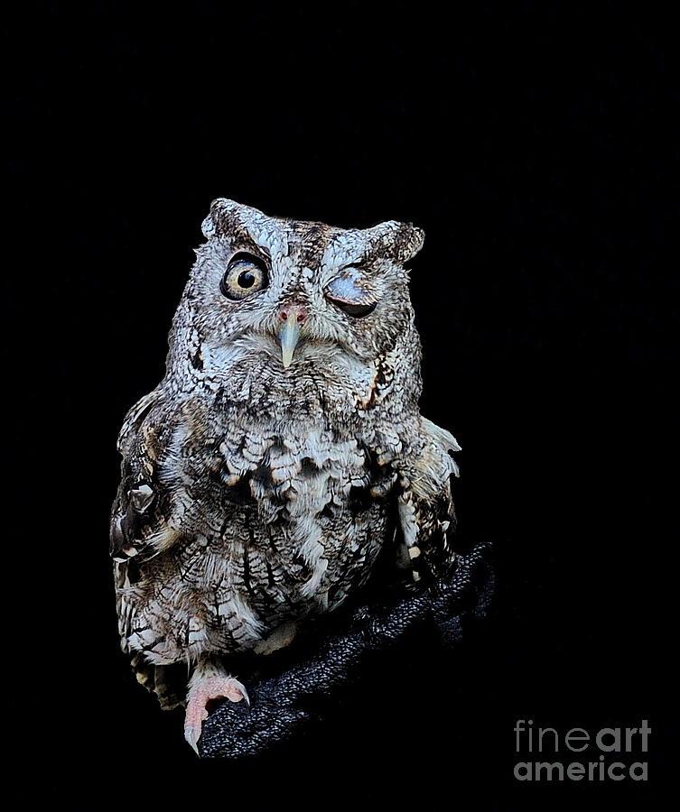 Little Owl Winks Eye in Darkness by Wayne Nielsen