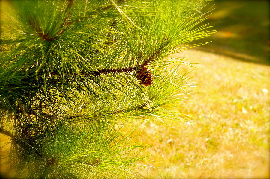 Tree Photograph - Little Seed Big Energy  by Danielle  Broussard