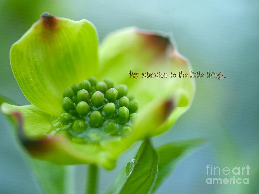 White Dogwood Flower Photograph - Little Things by Irina Wardas