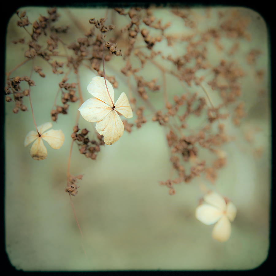 Flowers Photograph - Little White Flowers - Floral - The Little Things In Life by Gary Heller
