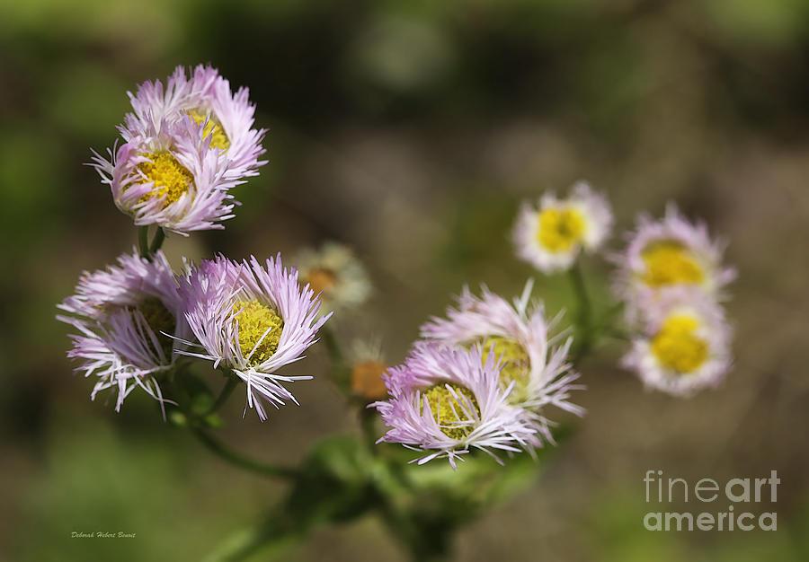 Wildflowers Photograph - Little Wild Flowers by Deborah Benoit