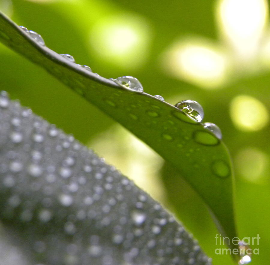 Macro Photograph - Live Lightly On The Earth2 by Laura Yamada