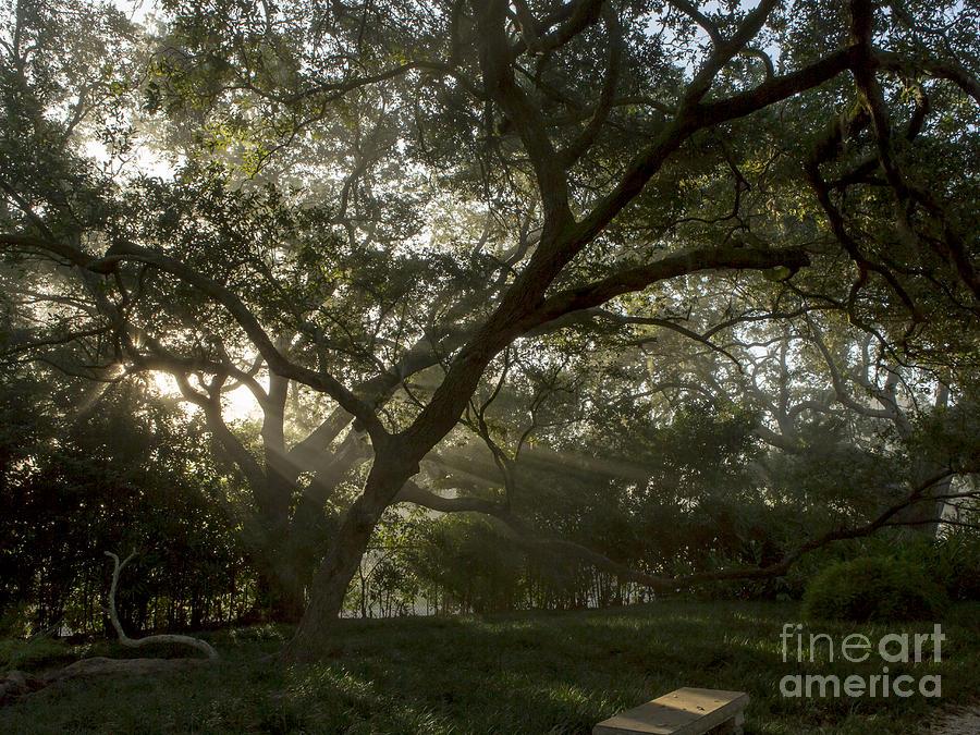 Jefferson Island Photograph - Live Oak Light Streaming Through Fog by Kelly Morvant