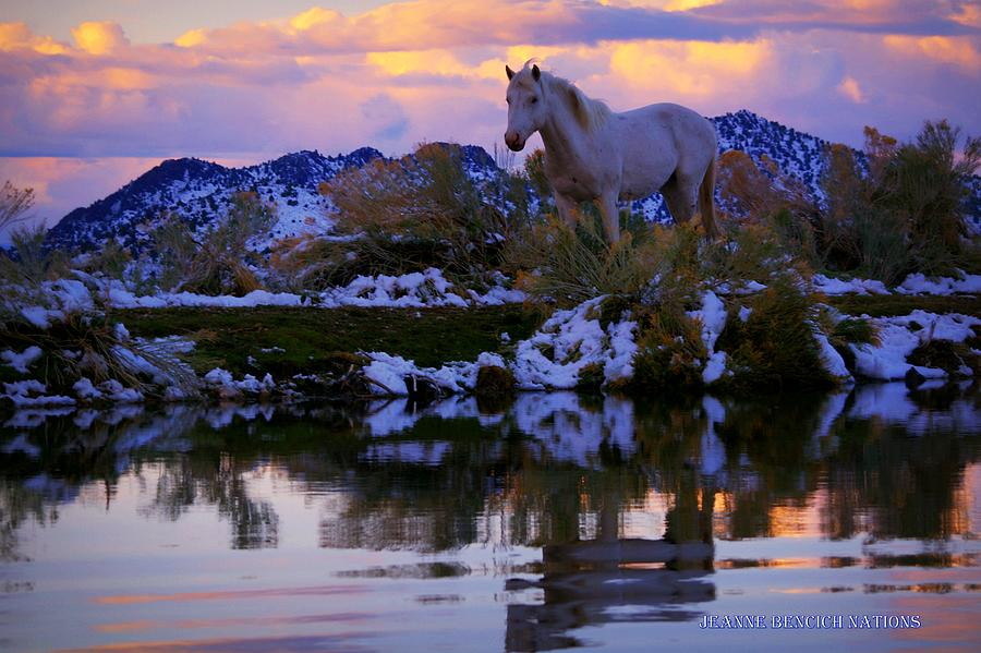 Wild Horse Photograph - Live The Dream  by Jeanne  Bencich-Nations