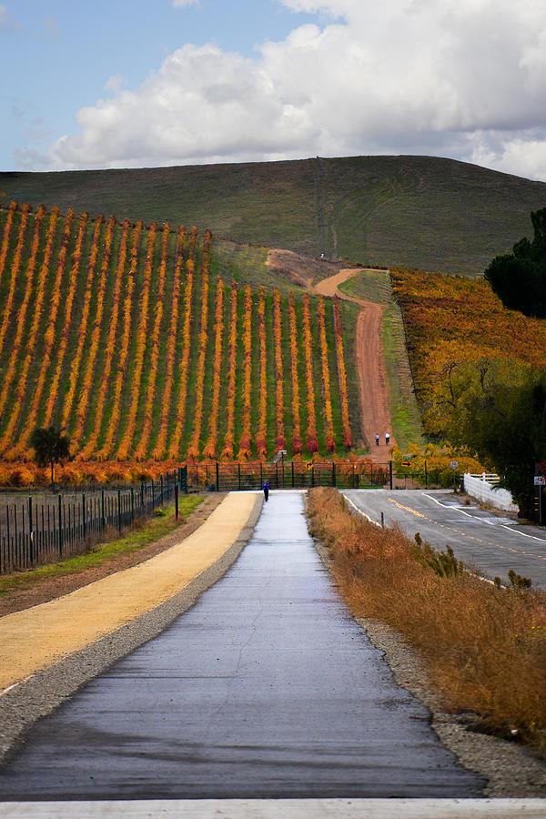 Vineyards Photograph - Livermore Vineyard 2 by Karen  W Meyer