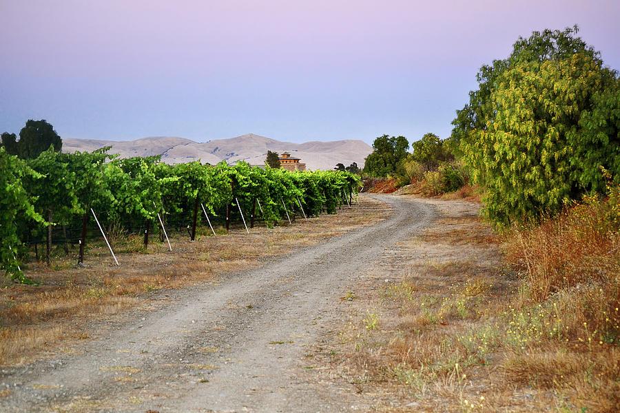 Vineyard Photograph - Livermore Vineyard 3 by Karen  W Meyer