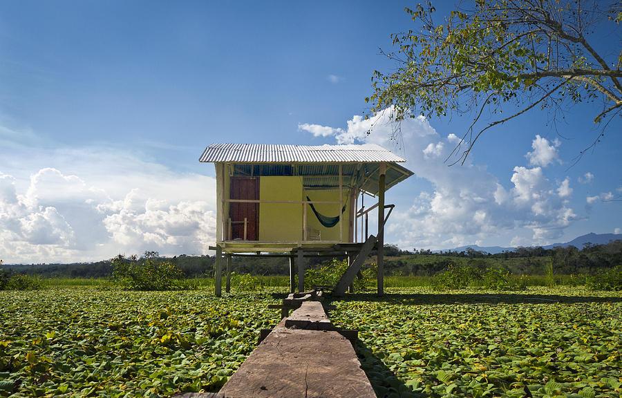 Swamp Photograph - Living Alone by Marlon Dag