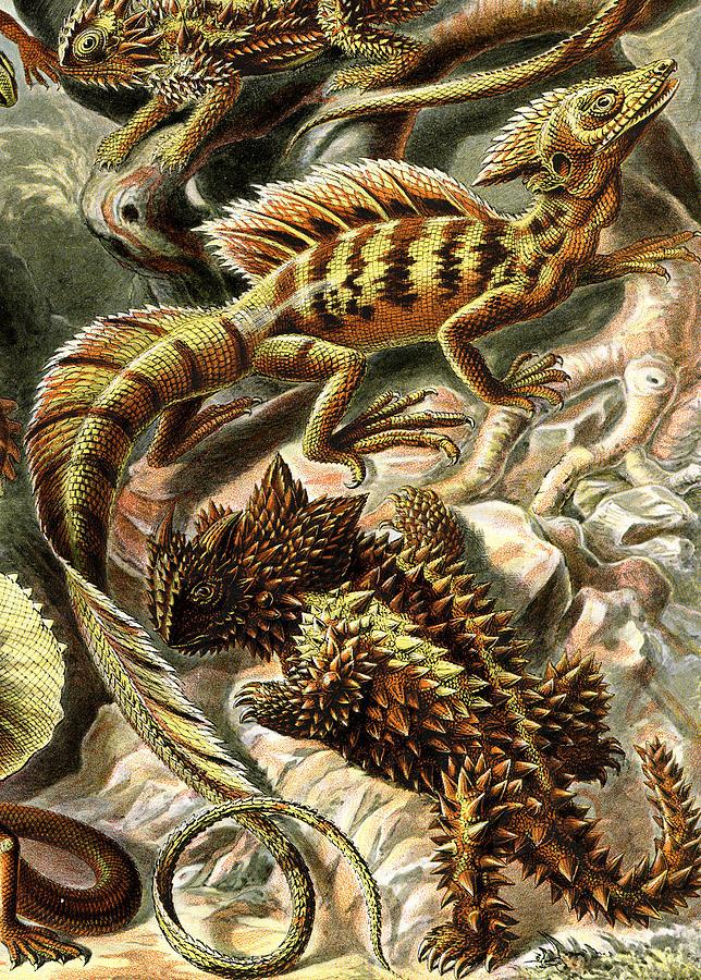Lacertilia Digital Art - Lizard Detail II by Unknown